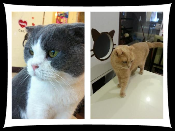 Cat Cafe King Kong Cat